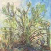 Palo Verde Morning Tohono Chul, 12x12, oil, 2016, MMilstead