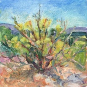 Bush in Bloom, Cornville, AZ, plein air, oil on linen, $50